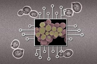 New Device Could Make Large Biological Circuits Practical