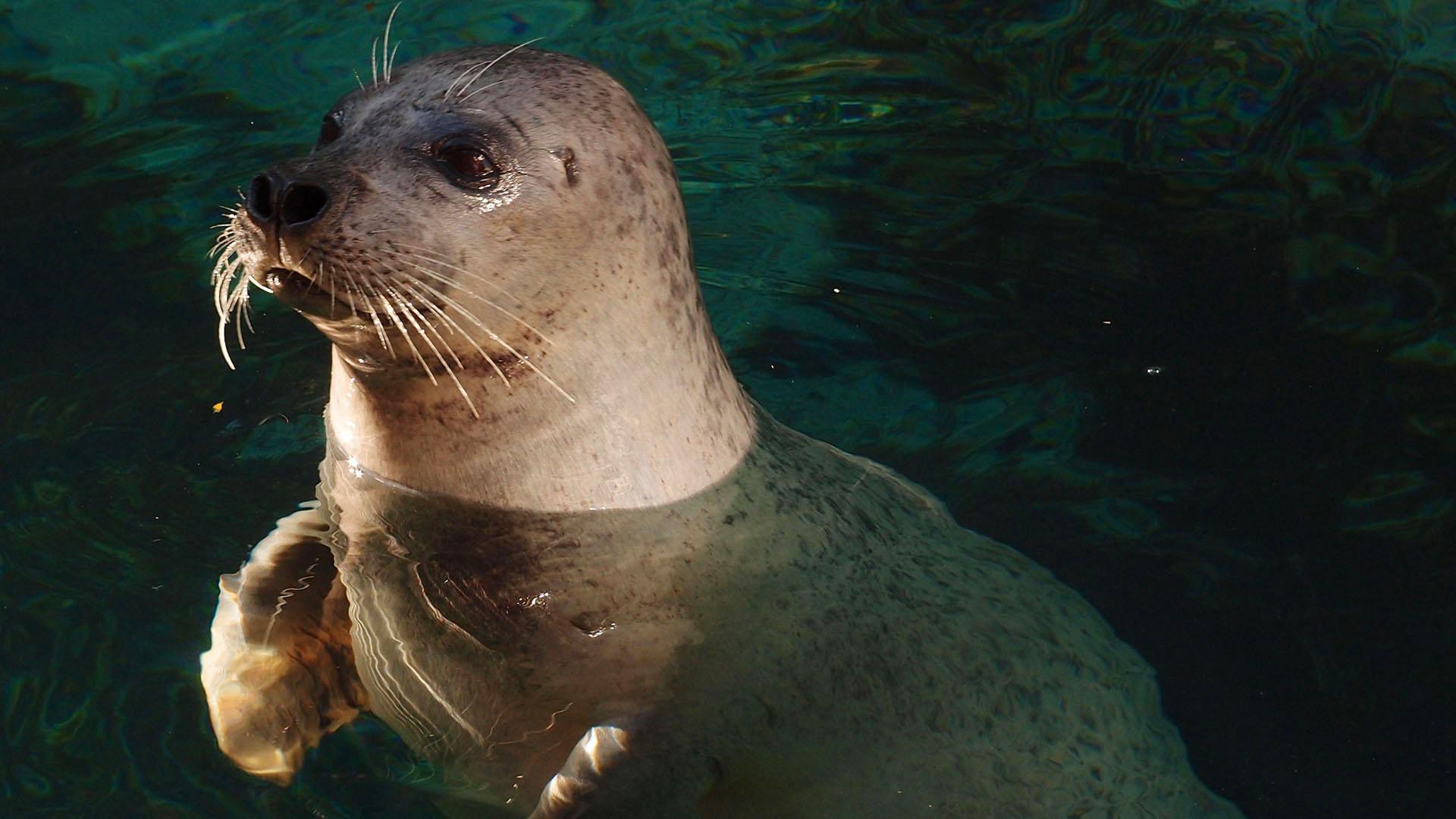 Seal-whisker-inspired Sensing