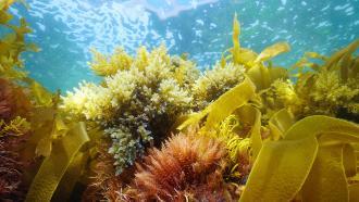 Saving Seaweed